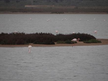 Flamingos am Cabo de Gata