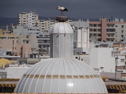 Storche gibt es hier in Faro, und überhaupt an der Algarve, unglaublich viele.