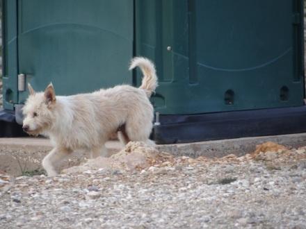 Unglaublich, wie viele streunende Hunde einem in Portugal und Spanien über den Weg laufen – immer auf der Suche nach Futter. Das nimmt mich jedes Mal mit und ein paar Mal hab' ich schon meinen gesamten Käsevorrat verfüttert.