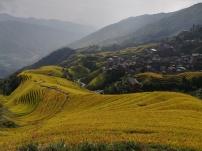 Longji-Reisterrassen im GOLDENEN Oktober!