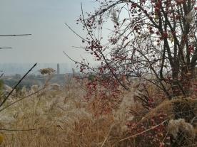 """... der Perspektive. (Blick vom """"Öko-Park"""" auf eine Pagode und Taiyuan im Hintergrund)"""