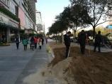 """Städtische Vorbereitungen auf Weihnachten: da wird innerhalb von gut einer Woche eben mal ein neuer """"Grünstreifen"""" geschaffen."""
