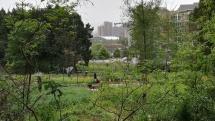 Am Stadtrand: so etwas wie Schrebergärten, in denen die (ärmeren und meist älteren) Bewohner Gemüse anpflanzen.