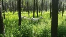 Und damit hatte ich auch nicht gerechnet: Ziegen in einem kleinen Waldstück (der Ziegenhirte stand hinter mir).
