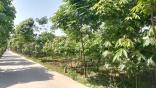 Üppigste Vegetation (Landwirtschaft), trotz des enorm trockenen Klimas hier.