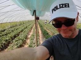 Leckere Erdbeeren zum Selberpflücken. (Die Kiappe hatte ich mir 10 Minuten zuvor in der Nähe des Zoos gekauft, wo wegen des Wetters an etwa 100 Ständen etwa 1 Million Kappen und Mützen verkauft wurden. Hätte es geregnet, hätte es an 100 Ständen ca. 1 Million Regenschirme gegeben.)