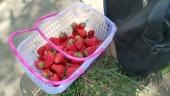 Saftige und sehr leckere Erdbeeren, von denen ich zum Glück etwa die Hälfte gleich verspeist habe. Denn die andere Hälfte war nach ca. 45 weiteren Kilometern in der Satteltasche nur noch Matsch :(