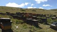 Sichuan-Gansu-Grasland-erste KehreZ1 (3) (FILEminimizer)